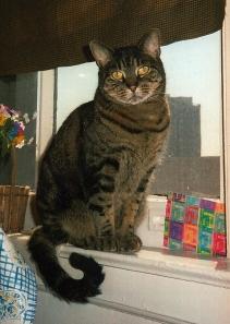 Kitty-Pooh, 1992-2006